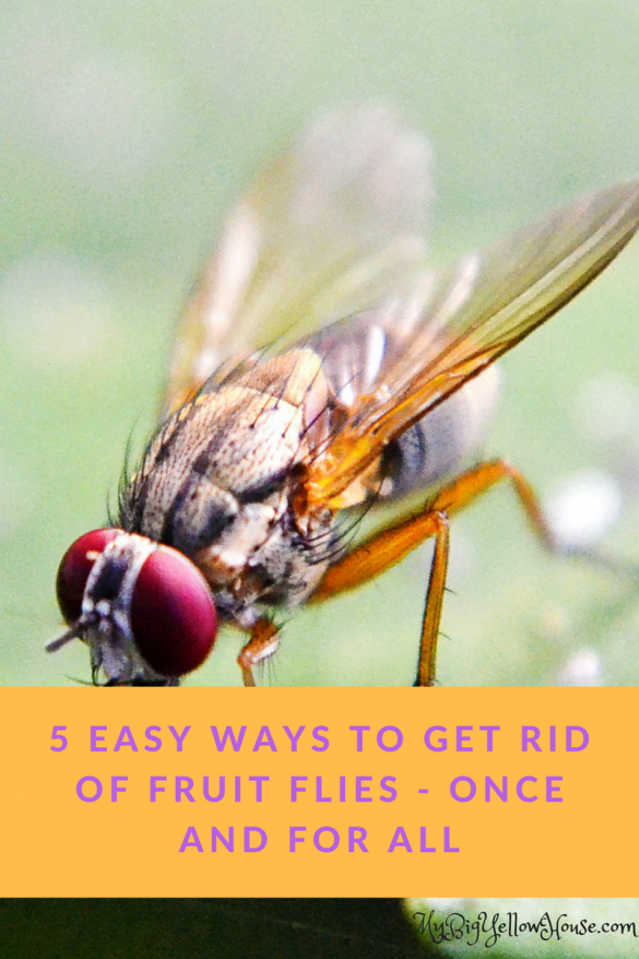 5 easy ways to get rid of fruit flies - once and for all